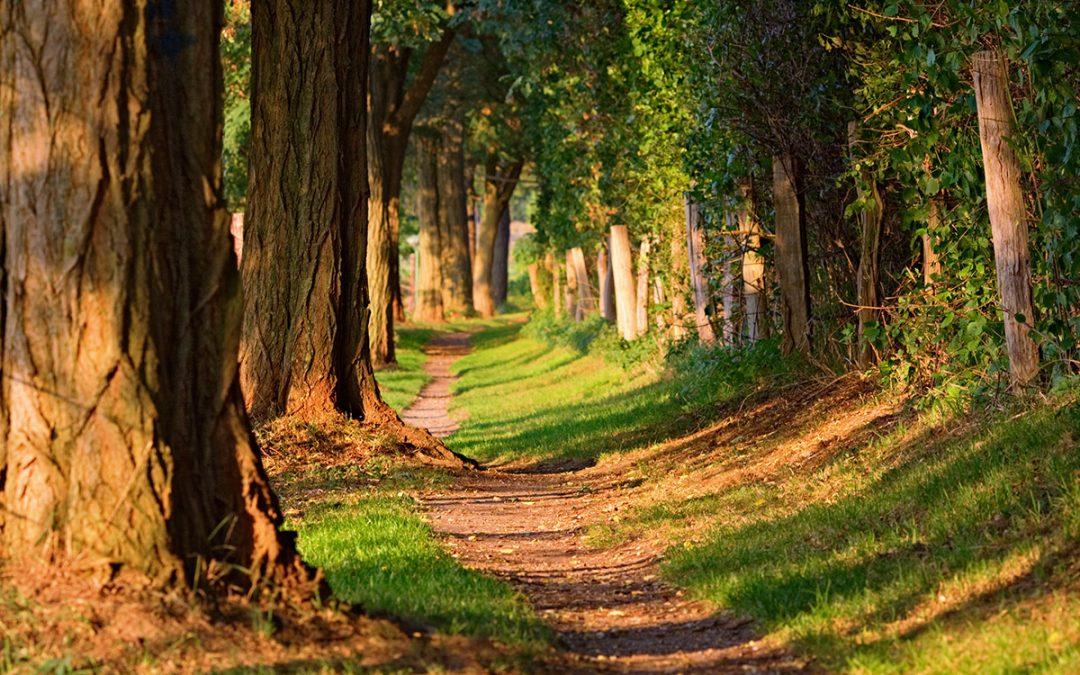 Nachhaltigkeit – dem Begriff auf der Spur